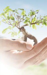 Optimis - Organisational Capabilities, Workforce Competencies